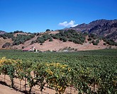 Vineyard, Winery, Napa Valley, California, United States of America