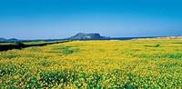 Seongsan Ilchulbong Peak,Jeju Island,Korea