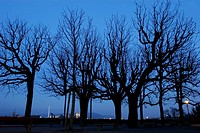 Night Profile of Bare Trees with City Lights in a distance, Basel, Switzerland