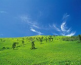 a Huge Green Flat Grassland With Several Trees Under a Blue Sky, Low Angle View, Hokkaido Prefecture, Japan