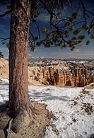 A ponderosa pine overlooks eroded sandstone hoodoos.