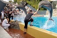 Dolphin show, Loro Parque, Puerto de la Cruz, Tenerife, Canary Islands, Spain, Tursiops truncatus