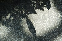 Shadows of leaves on stone, close-up