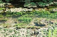 Aquatic plants growing in water, close-up