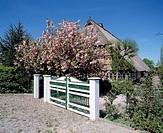 Germany. Hamburg, Elbe, Hamburg-Bergedorf, Vierlande, Neuengamme, farmhouse, springtime, blooms, Japanese cherry tree, white door, entrance