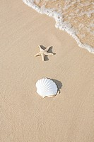 Shell and starfish on a beach