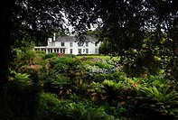 Cornwall, Mawnan Smith, Trebah botanical Garden, a sub_tropical ravine garden
