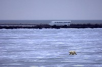 Manitoba, Churchill, Tourists on the Tundra Buggy Experience to see the Polar bears that gather in the region anticipating the ice of the Hudson bay t...
