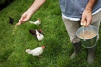 Man feeding hens in garden low section elevated view