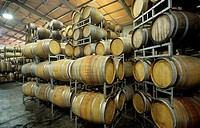 Wine barrels in storage shed