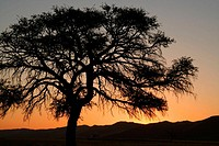 Sunset in Namibian desert