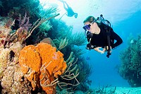 Diver on colorful reef with elephant ear sponge  Grand Turk, Turks and Caicos