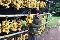 Banana, Santos, São Paulo, Brazil.