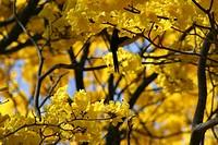 Ypê Yellow, Brooklin, São Paulo, Brazil