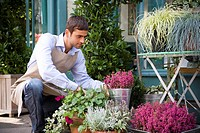 Male florist arranging the plant display outside his shop