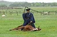 Csikos, hungarian horse shephert,