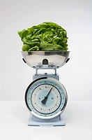 Lettuce on kitchen scales