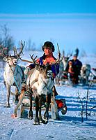 Man in traditional clothes with Reindeer sledge, Lapland, Norway, Rangifer tarandus, Sami