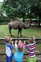 Italy - Friuli-Venezia Giulia Region - Udine Province - Lignano Sabbiadoro. Kids look at camel at Lignano Pineta's Punta Verde zoological park