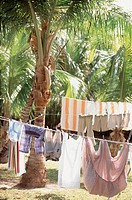 Washing line with colourful summer clothes drying in the sunshine amongst the palms