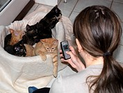 Teenage Girl Taking Photograph with Camera Phone of Five Kittens
