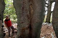 wood, hiker