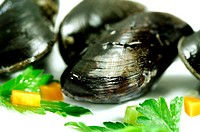 Close_up of mussels