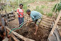 Turning over compost, vegetable and fruit garden communally farmed in Kutepe, Oecussi-Ambeno. East Timor