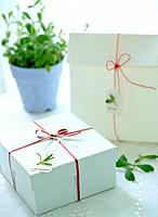 Gift boxes and potted plant