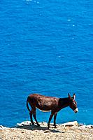 Donkey on the island of Folegandros, Cyclades, Greece