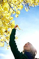 Woman picking maple leaf (thumbnail)
