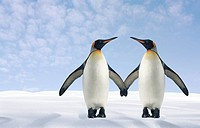 Two Penguins Holding Hands