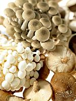 Mushrooms (thumbnail)