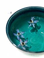 Borage herbs in bowl of water