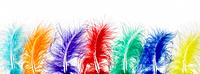 Row of Coloured Feathers (thumbnail)