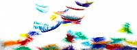 Colourful Feathers falling onto table