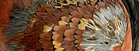 Brown and black feathers close up