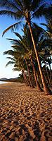Beach with palm trees (thumbnail)