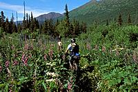 Bicyclist on Resurrection Pass Trail KP AK Summer