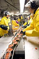 Cannery workers prepare salmon at Peter Pan Seafoods in Bristol Bay Dillingham Alaska