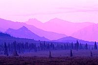 Morning Fog Tundra & Trees Denali Natl Park Interior AK summer scenic