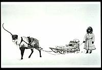 Mary Toutuk & Sled Deer Reindeer Fair 1917