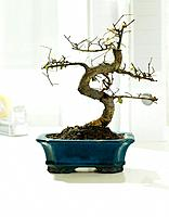 Bonsai pot on desk