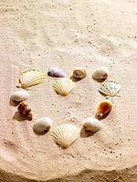 Seashells in shape of heart