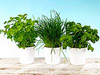 Close_up of three potted plants in a row
