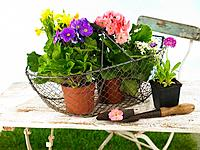 Close_up of flowering plants in a wire basket