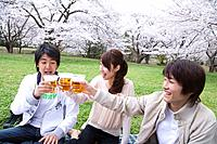 Three young people toasting with glasses, surrounded with cherry blossoms, side view, Japan
