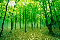 Trees in the Woods, Front View, Pan Focus (thumbnail)