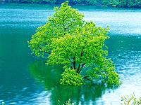 Tree in Water, High Angle View, Pan Focus