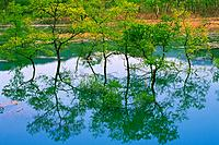 Trees in Water, High Angle View, Pan Focus